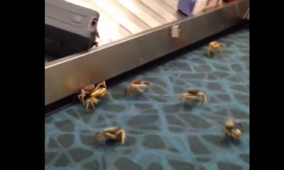 crabes à l'aéroport