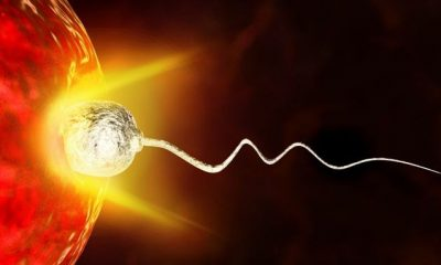 ovules choisissent le spermatozoïde