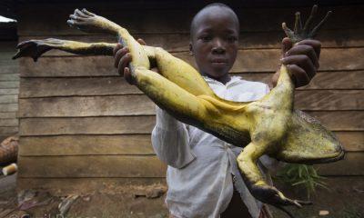 Top 4 des choses incroyables que vous ignorez sur l'Afrique