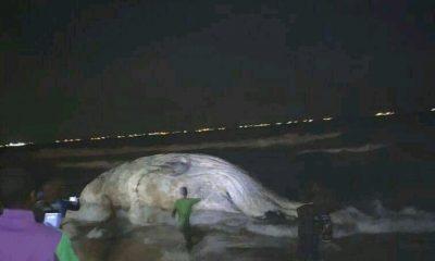 Baleine à Lomé