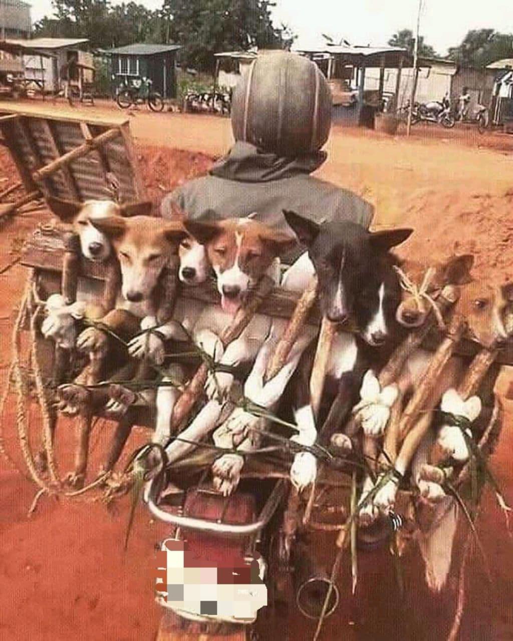 Livreur de chiens
