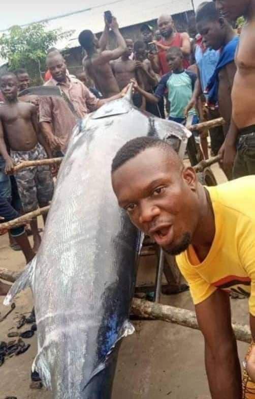 Il capture poisson